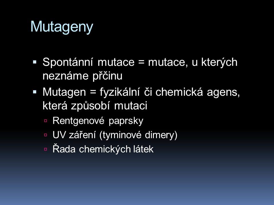 Mutageny  Spontánní mutace = mutace, u kterých neznáme přčinu  Mutagen = fyzikální či chemická agens, která způsobí mutaci  Rentgenové paprsky  UV záření (tyminové dimery)  Řada chemických látek