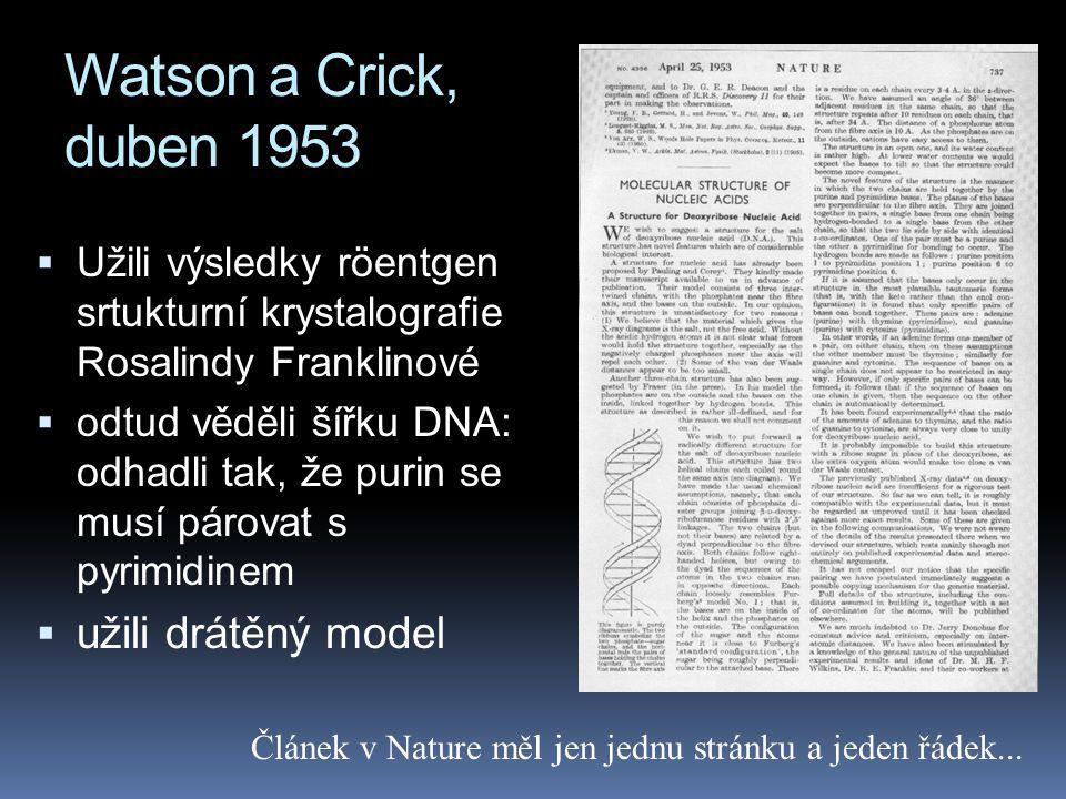 Watson a Crick, duben 1953  Užili výsledky röentgen srtukturní krystalografie Rosalindy Franklinové  odtud věděli šířku DNA: odhadli tak, že purin se musí párovat s pyrimidinem  užili drátěný model Článek v Nature měl jen jednu stránku a jeden řádek...