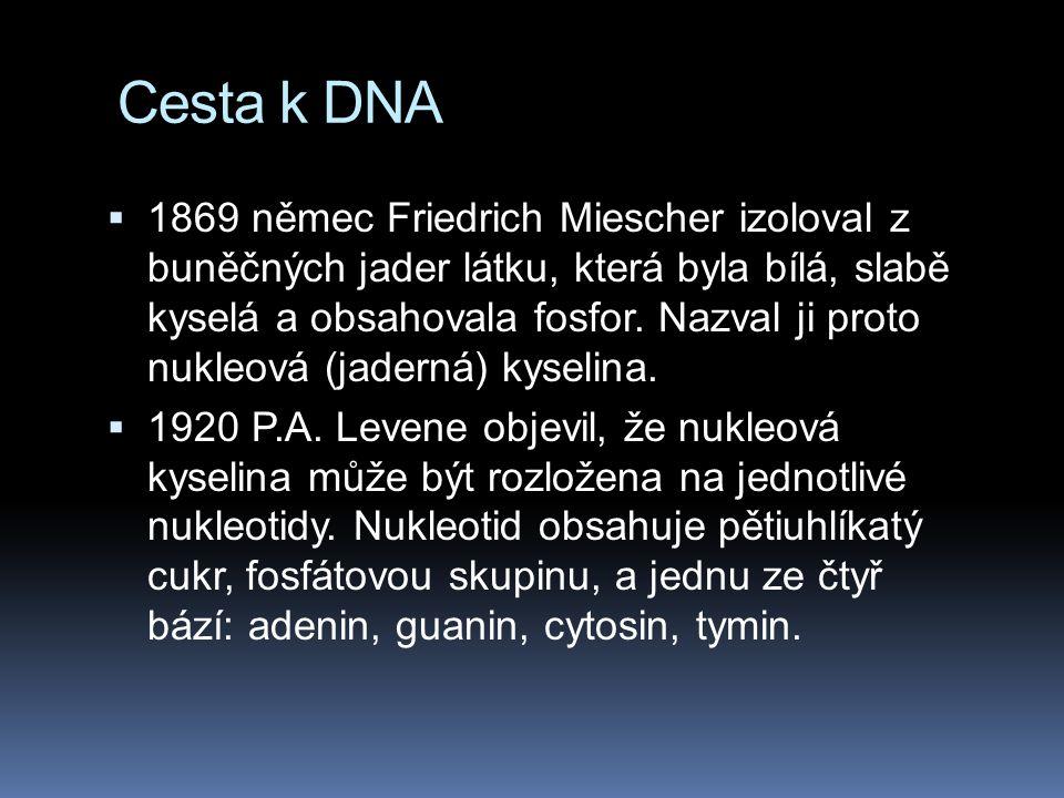 Cesta k DNA  1869 němec Friedrich Miescher izoloval z buněčných jader látku, která byla bílá, slabě kyselá a obsahovala fosfor.