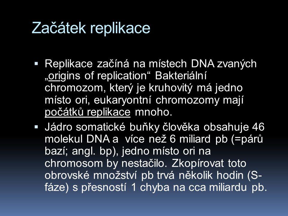 """Začátek replikace  Replikace začíná na místech DNA zvaných """"origins of replication Bakteriální chromozom, který je kruhovitý má jedno místo ori, eukaryontní chromozomy mají počátků replikace mnoho."""
