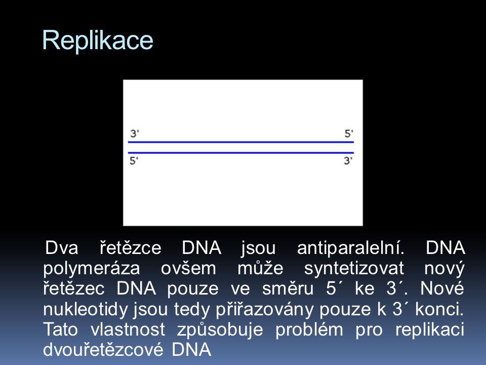 Replikace Dva řetězce DNA jsou antiparalelní.