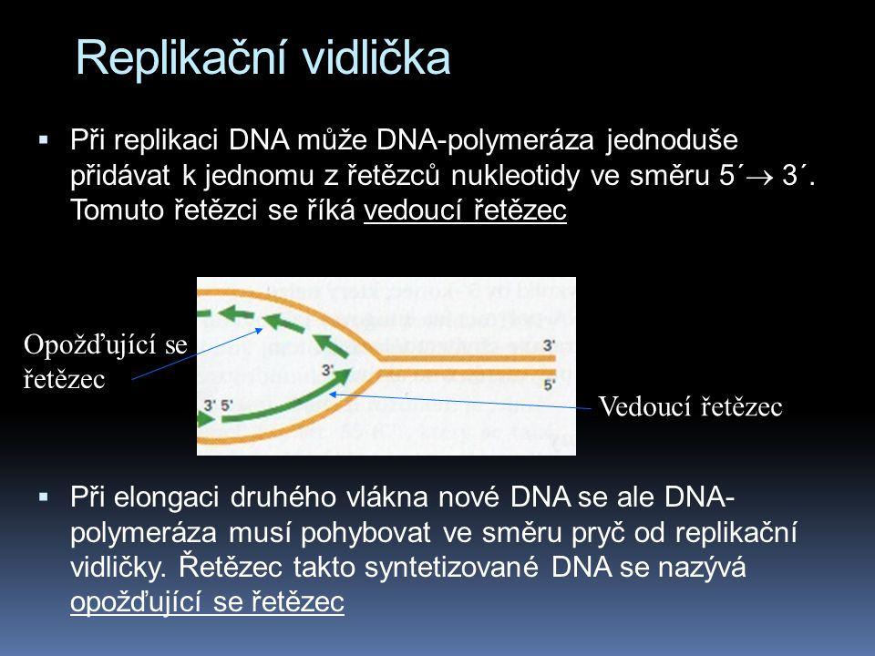 Replikační vidlička  Při replikaci DNA může DNA-polymeráza jednoduše přidávat k jednomu z řetězců nukleotidy ve směru 5´  3´.