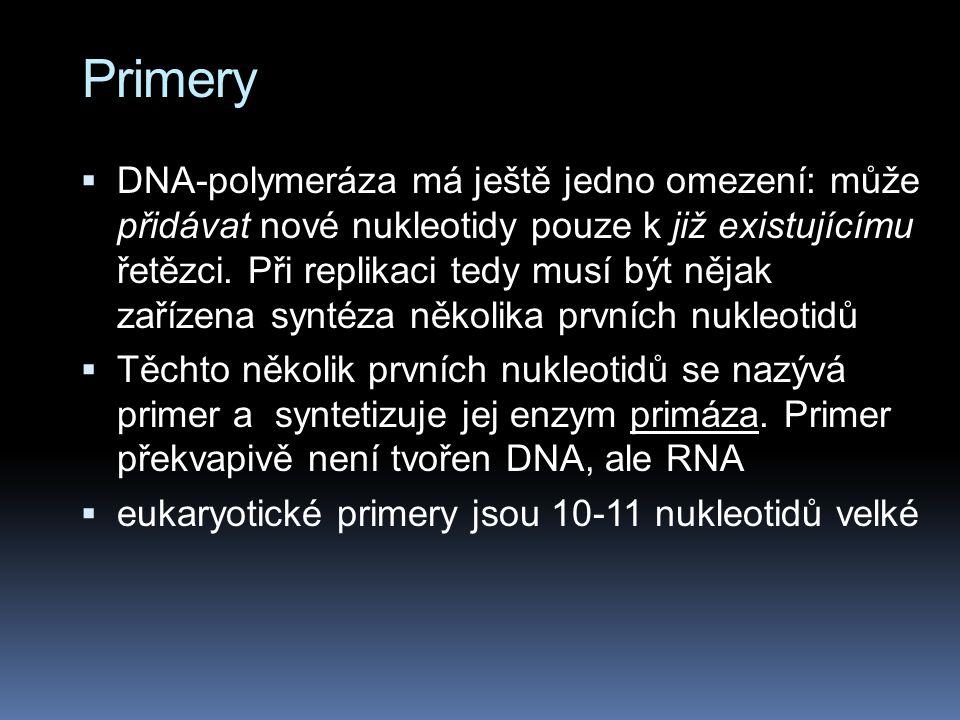 Primery  DNA-polymeráza má ještě jedno omezení: může přidávat nové nukleotidy pouze k již existujícímu řetězci.