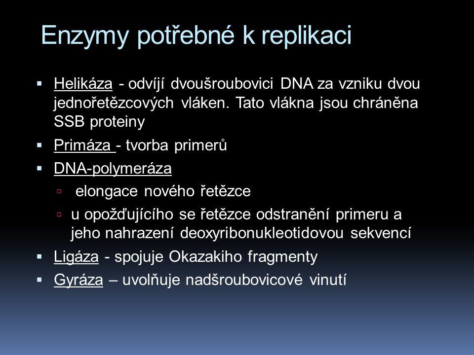 Enzymy potřebné k replikaci  Helikáza - odvíjí dvoušroubovici DNA za vzniku dvou jednořetězcových vláken.