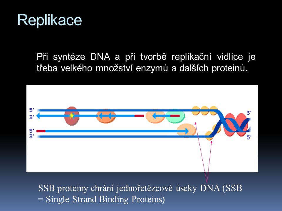 Replikace Při syntéze DNA a při tvorbě replikační vidlice je třeba velkého množství enzymů a dalších proteinů.