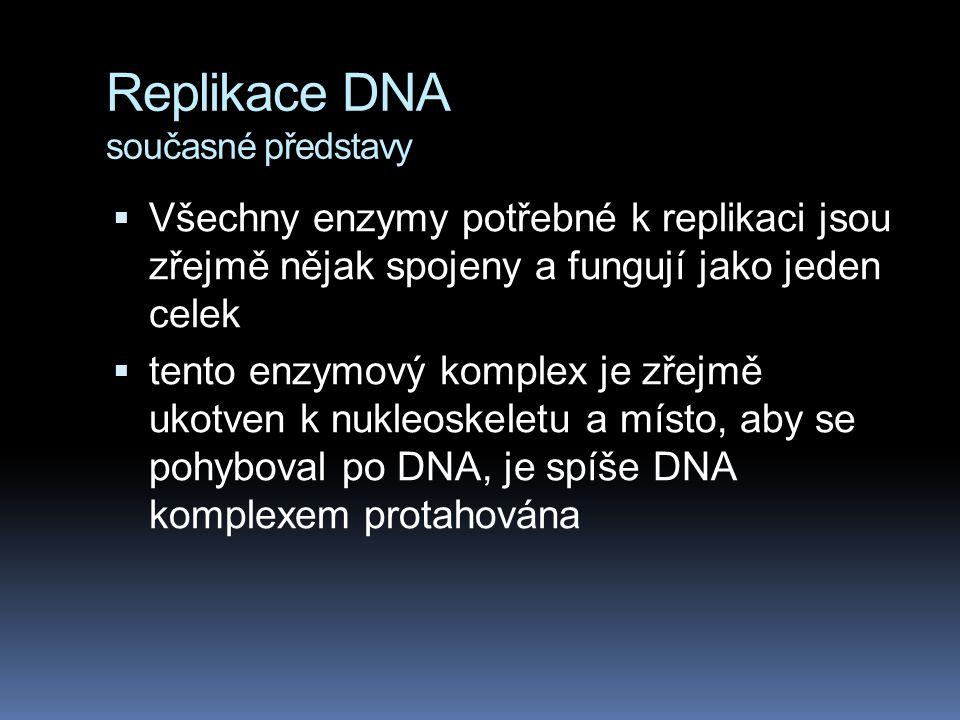  Všechny enzymy potřebné k replikaci jsou zřejmě nějak spojeny a fungují jako jeden celek  tento enzymový komplex je zřejmě ukotven k nukleoskeletu a místo, aby se pohyboval po DNA, je spíše DNA komplexem protahována
