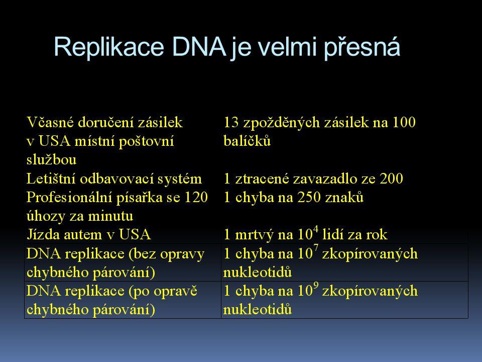 Replikace DNA je velmi přesná
