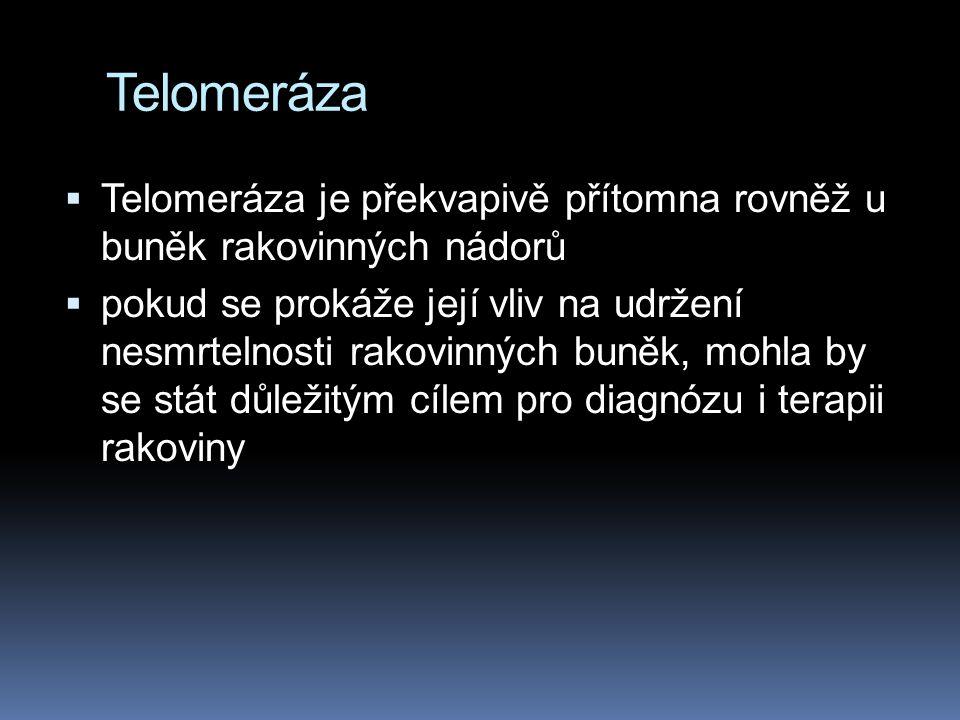 Telomeráza  Telomeráza je překvapivě přítomna rovněž u buněk rakovinných nádorů  pokud se prokáže její vliv na udržení nesmrtelnosti rakovinných buněk, mohla by se stát důležitým cílem pro diagnózu i terapii rakoviny
