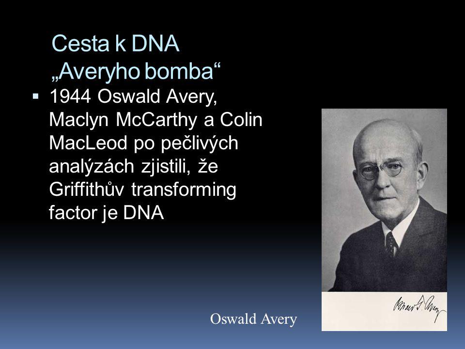 """Cesta k DNA """"Averyho bomba  1944 Oswald Avery, Maclyn McCarthy a Colin MacLeod po pečlivých analýzách zjistili, že Griffithův transforming factor je DNA Oswald Avery"""