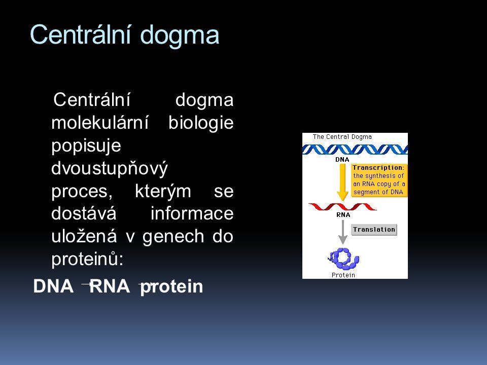 Centrální dogma Centrální dogma molekulární biologie popisuje dvoustupňový proces, kterým se dostává informace uložená v genech do proteinů: DNA RNA protein