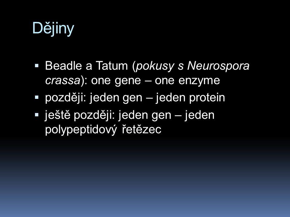 Dějiny  Beadle a Tatum (pokusy s Neurospora crassa): one gene – one enzyme  později: jeden gen – jeden protein  ještě později: jeden gen – jeden polypeptidový řetězec