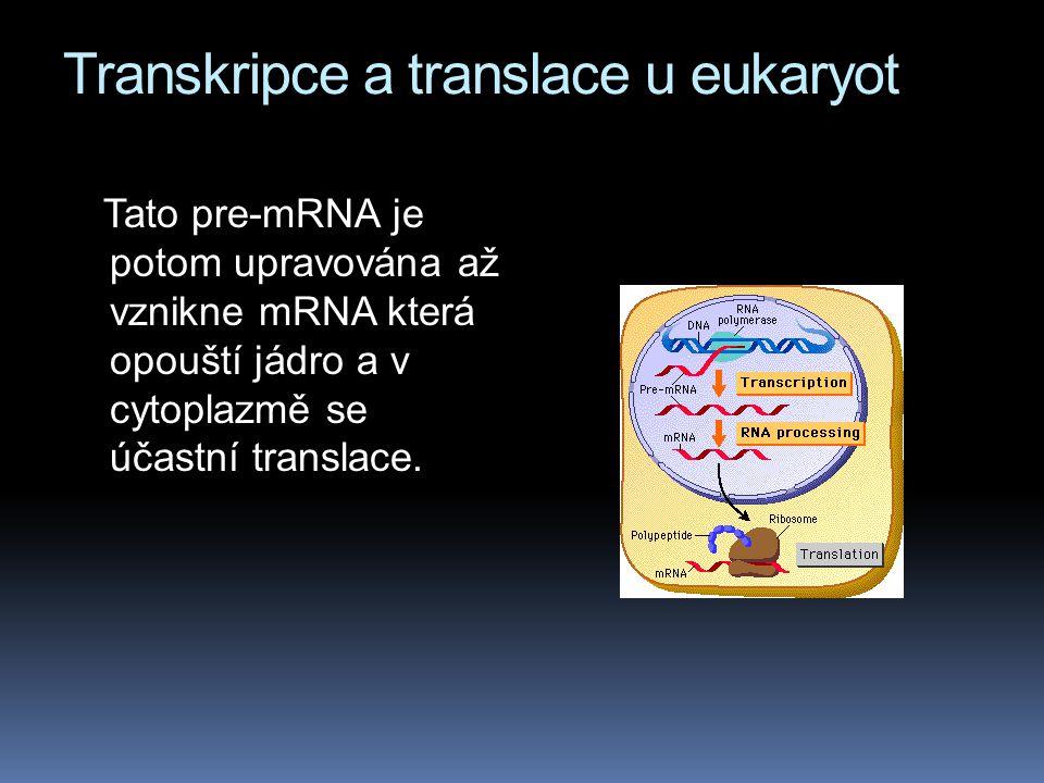 Transkripce a translace u eukaryot Tato pre-mRNA je potom upravována až vznikne mRNA která opouští jádro a v cytoplazmě se účastní translace.