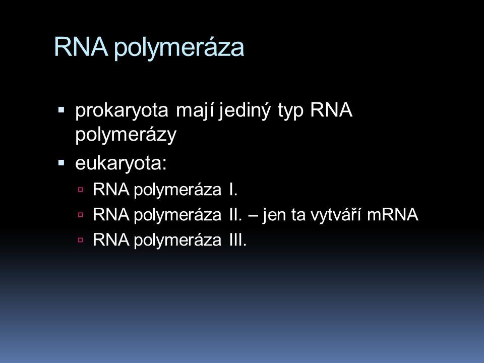 RNA polymeráza  prokaryota mají jediný typ RNA polymerázy  eukaryota:  RNA polymeráza I.