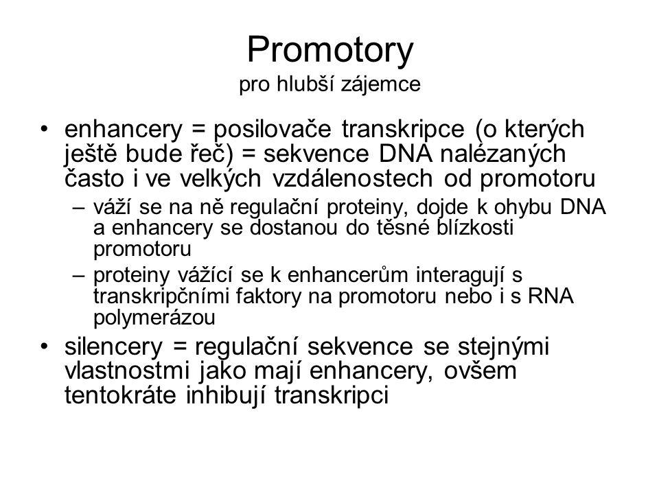 Promotory pro hlubší zájemce •enhancery = posilovače transkripce (o kterých ještě bude řeč) = sekvence DNA nalézaných často i ve velkých vzdálenostech od promotoru –váží se na ně regulační proteiny, dojde k ohybu DNA a enhancery se dostanou do těsné blízkosti promotoru –proteiny vážící se k enhancerům interagují s transkripčními faktory na promotoru nebo i s RNA polymerázou •silencery = regulační sekvence se stejnými vlastnostmi jako mají enhancery, ovšem tentokráte inhibují transkripci