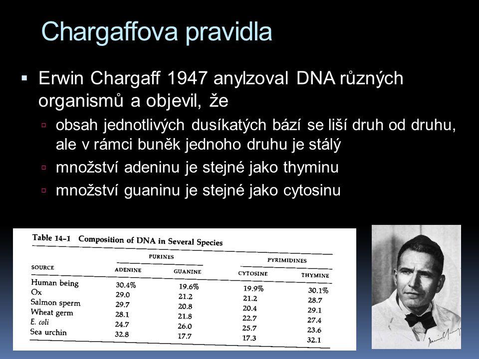 Chargaffova pravidla  Erwin Chargaff 1947 anylzoval DNA různých organismů a objevil, že  obsah jednotlivých dusíkatých bází se liší druh od druhu, ale v rámci buněk jednoho druhu je stálý  množství adeninu je stejné jako thyminu  množství guaninu je stejné jako cytosinu