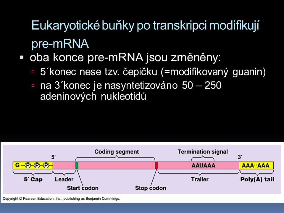 Eukaryotické buňky po transkripci modifikují pre-mRNA  oba konce pre-mRNA jsou změněny:  5´konec nese tzv.