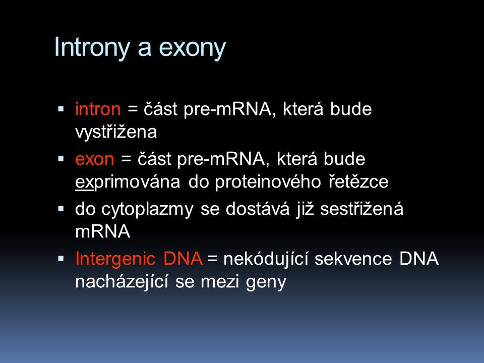 Introny a exony  intron = část pre-mRNA, která bude vystřižena  exon = část pre-mRNA, která bude exprimována do proteinového řetězce  do cytoplazmy se dostává již sestřižená mRNA  Intergenic DNA = nekódující sekvence DNA nacházející se mezi geny