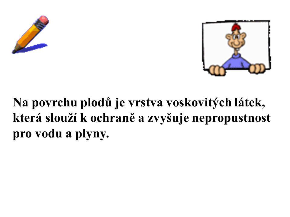 9.Když se na špičce listu filodendronu vytvořila kapka vody, babička vždy říkala, že bude pršet.