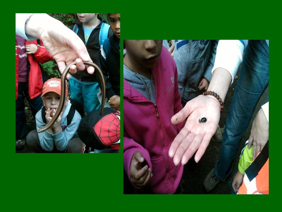 MEDVĚDI Děti si přiblížily starou českou tradici-pletení pampeliškových věnečků.