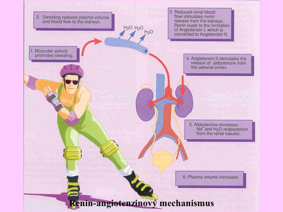 Renin-angiotenzinový mechanismus