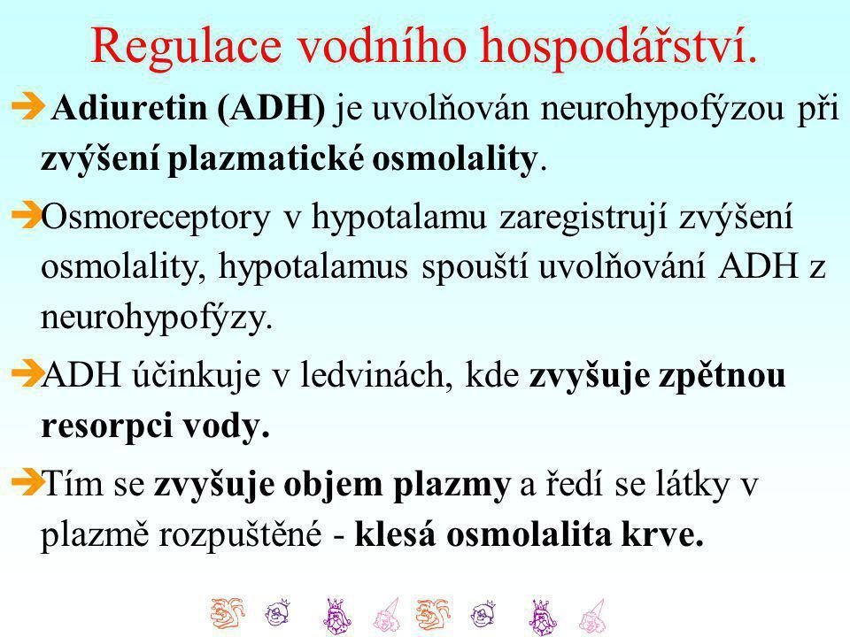 Regulace vodního hospodářství.  Adiuretin (ADH) je uvolňován neurohypofýzou při zvýšení plazmatické osmolality.  Osmoreceptory v hypotalamu zaregist