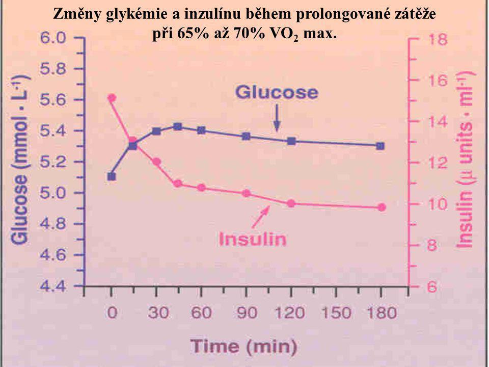 Změny glykémie a inzulínu během prolongované zátěže při 65% až 70% VO 2 max.