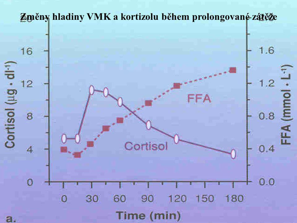 Změny adrenalinu, noradrenalin, růstového hormonu a VMK během prolongované zátěže