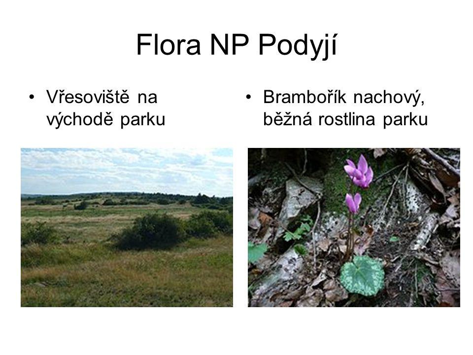 Flora NP Podyjí •Vřesoviště na východě parku •Brambořík nachový, běžná rostlina parku