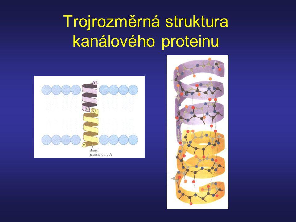 Trojrozměrná struktura kanálového proteinu