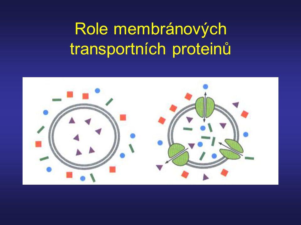 Role membránových transportních proteinů