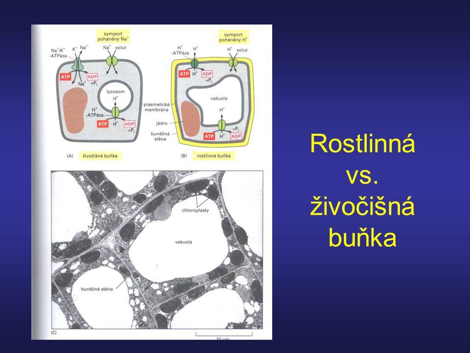Rostlinná vs. živočišná buňka