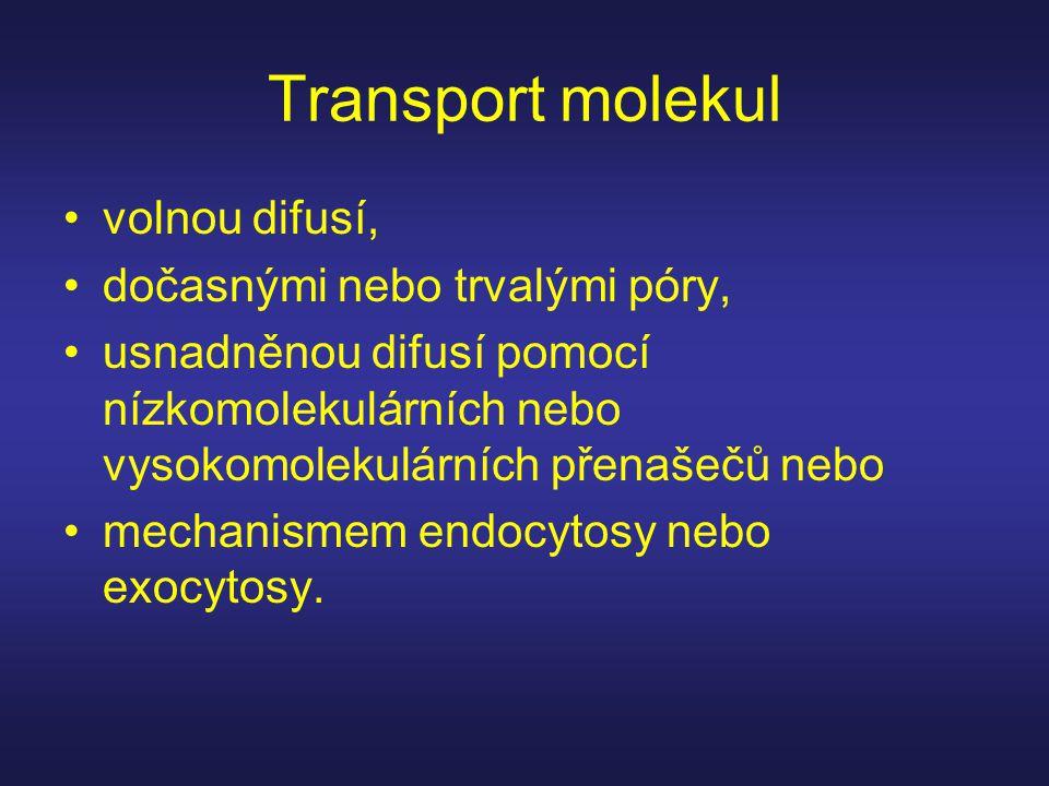 Transport molekul •volnou difusí, •dočasnými nebo trvalými póry, •usnadněnou difusí pomocí nízkomolekulárních nebo vysokomolekulárních přenašečů nebo •mechanismem endocytosy nebo exocytosy.