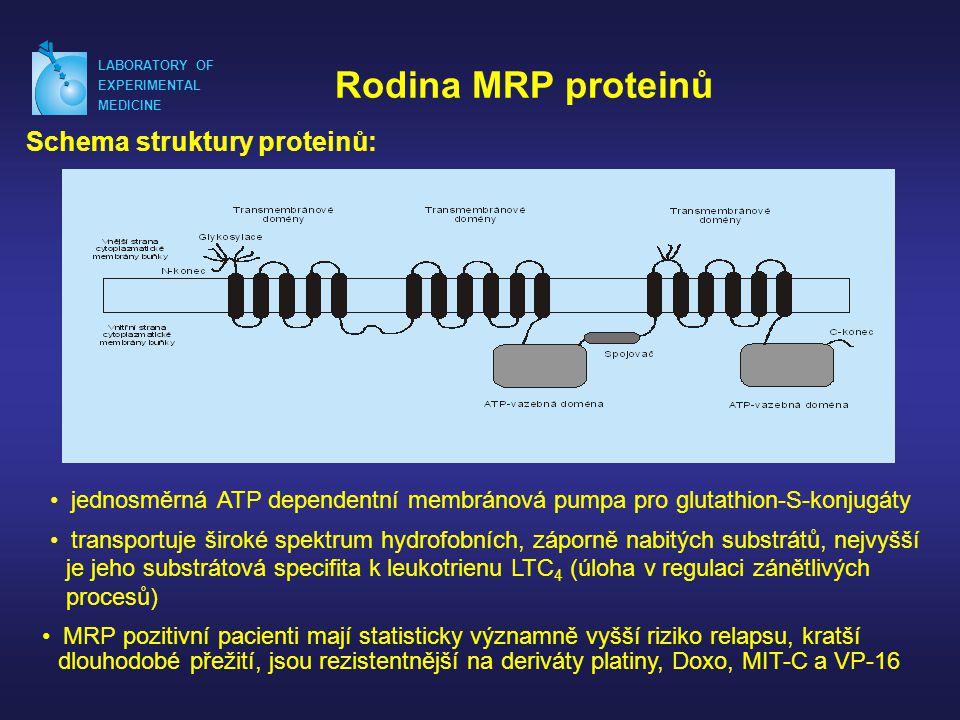 LABORATORY OF EXPERIMENTAL MEDICINE Rodina MRP proteinů Schema struktury proteinů: • jednosměrná ATP dependentní membránová pumpa pro glutathion-S-konjugáty • transportuje široké spektrum hydrofobních, záporně nabitých substrátů, nejvyšší je jeho substrátová specifita k leukotrienu LTC 4 (úloha v regulaci zánětlivých procesů) • MRP pozitivní pacienti mají statisticky významně vyšší riziko relapsu, kratší dlouhodobé přežití, jsou rezistentnější na deriváty platiny, Doxo, MIT-C a VP-16