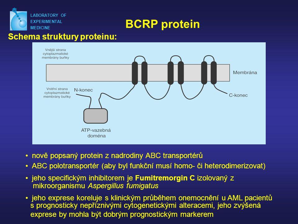 LABORATORY OF EXPERIMENTAL MEDICINE BCRP protein Schema struktury proteinu: • nově popsaný protein z nadrodiny ABC transportérů mikroorganismu Aspergillus fumigatus • ABC polotransportér (aby byl funkční musí homo- či heterodimerizovat) • jeho specifickým inhibitorem je Fumitremorgin C izolovaný z • jeho exprese koreluje s klinickým průběhem onemocnění u AML pacientů s prognosticky nepříznivými cytogenetickými alteracemi, jeho zvýšená exprese by mohla být dobrým prognostickým markerem