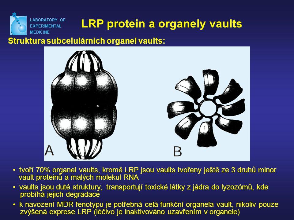 LABORATORY OF EXPERIMENTAL MEDICINE LRP protein a organely vaults Struktura subcelulárních organel vaults: • tvoří 70% organel vaults, kromě LRP jsou