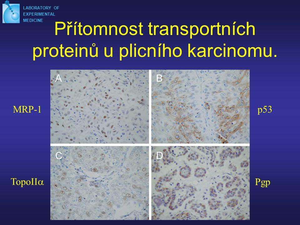 Přítomnost transportních proteinů u plicního karcinomu.