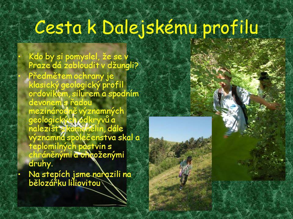Cesta k Dalejskému profilu •Kdo by si pomyslel, že se v Praze dá zabloudit v džungli? •Předmětem ochrany je klasický geologický profil ordovikem, silu