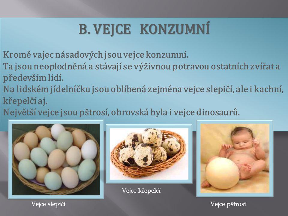 B. VEJCE KONZUMNÍ Kromě vajec násadových jsou vejce konzumní. Ta jsou neoplodněná a stávají se výživnou potravou ostatních zvířat a především lidí. Na