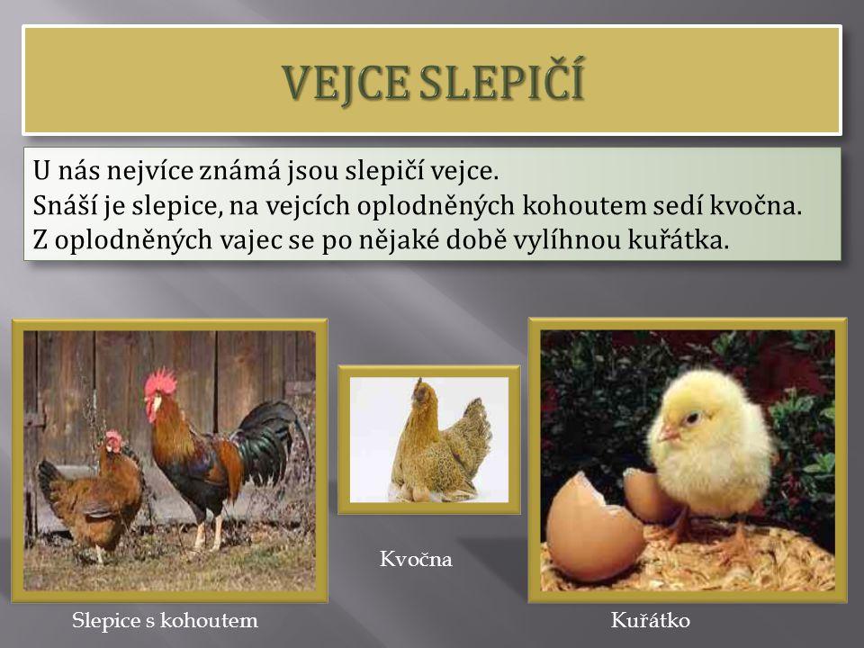 U nás nejvíce známá jsou slepičí vejce. Snáší je slepice, na vejcích oplodněných kohoutem sedí kvočna. Z oplodněných vajec se po nějaké době vylíhnou