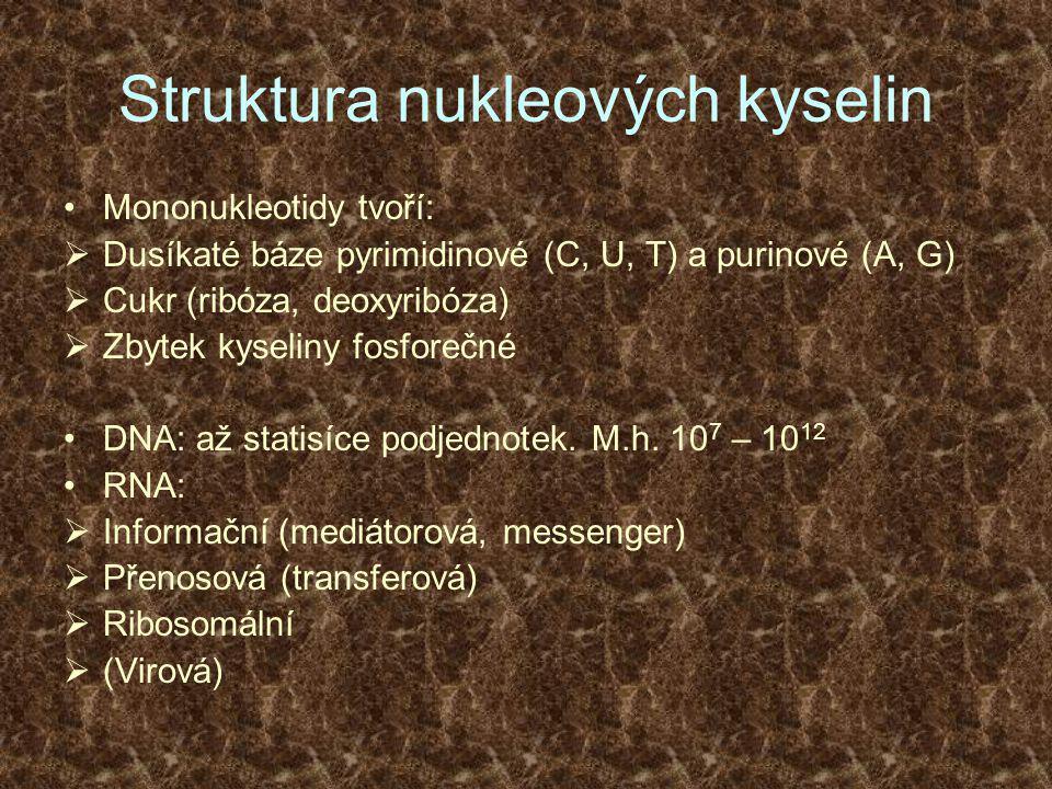 Struktura nukleových kyselin •Mononukleotidy tvoří:  Dusíkaté báze pyrimidinové (C, U, T) a purinové (A, G)  Cukr (ribóza, deoxyribóza)  Zbytek kyseliny fosforečné •DNA: až statisíce podjednotek.