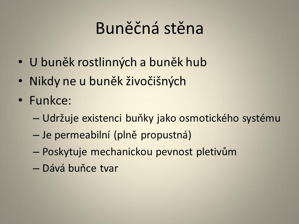 Buněčná stěna • U buněk rostlinných a buněk hub • Nikdy ne u buněk živočišných • Funkce: – Udržuje existenci buňky jako osmotického systému – Je perme