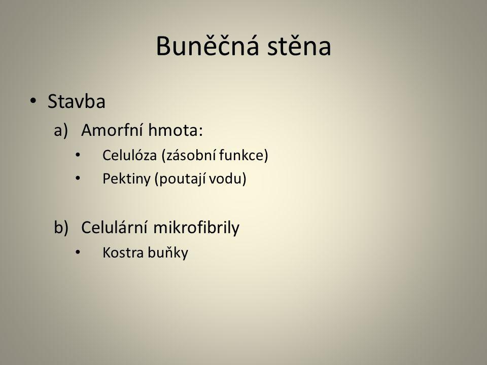 Buněčná stěna • Stavba a)Amorfní hmota: • Celulóza (zásobní funkce) • Pektiny (poutají vodu) b)Celulární mikrofibrily • Kostra buňky