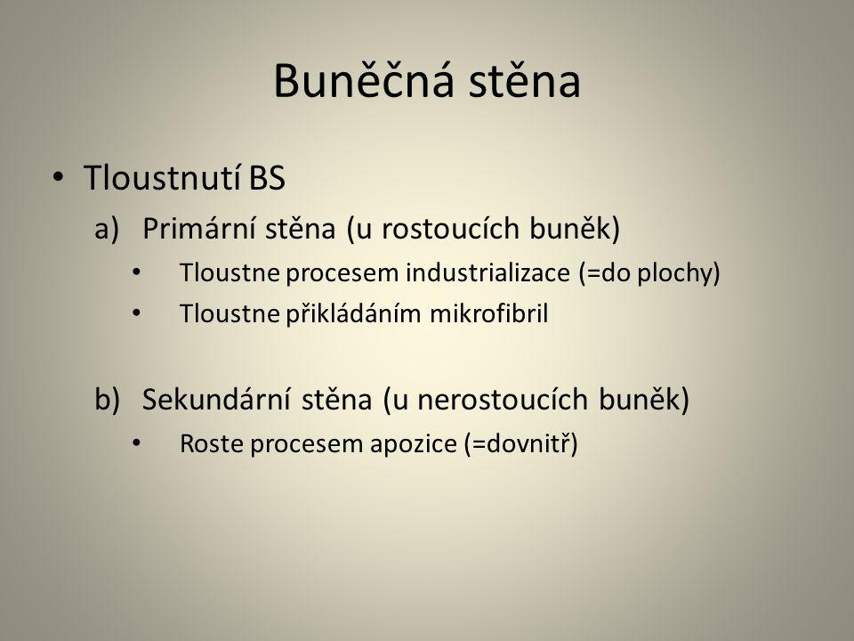 Buněčná stěna • Tloustnutí BS a)Primární stěna (u rostoucích buněk) • Tloustne procesem industrializace (=do plochy) • Tloustne přikládáním mikrofibri