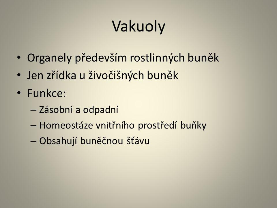 Vakuoly • Organely především rostlinných buněk • Jen zřídka u živočišných buněk • Funkce: – Zásobní a odpadní – Homeostáze vnitřního prostředí buňky –