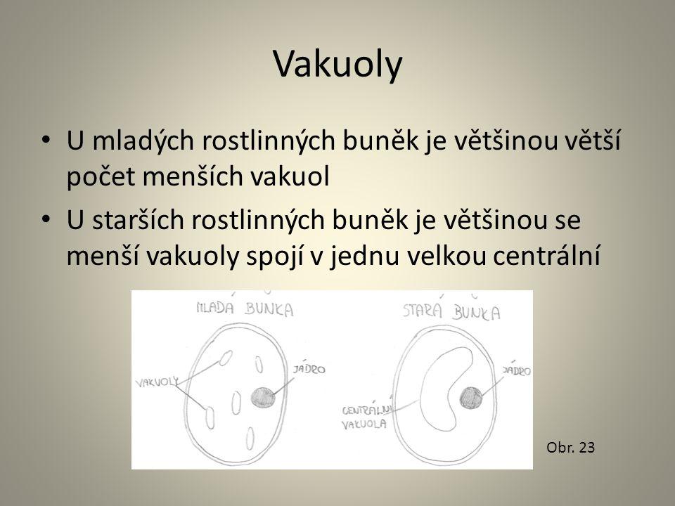 Vakuoly • U mladých rostlinných buněk je většinou větší počet menších vakuol • U starších rostlinných buněk je většinou se menší vakuoly spojí v jednu