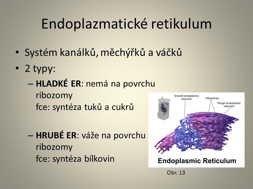 Endoplazmatické retikulum • Systém kanálků, měchýřků a váčků • 2 typy: – HLADKÉ ER: nemá na povrchu ribozomy fce: syntéza tuků a cukrů – HRUBÉ ER: váž
