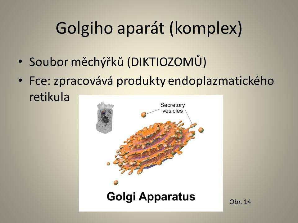 Golgiho aparát (komplex) • Soubor měchýřků (DIKTIOZOMŮ) • Fce: zpracovává produkty endoplazmatického retikula Obr. 14