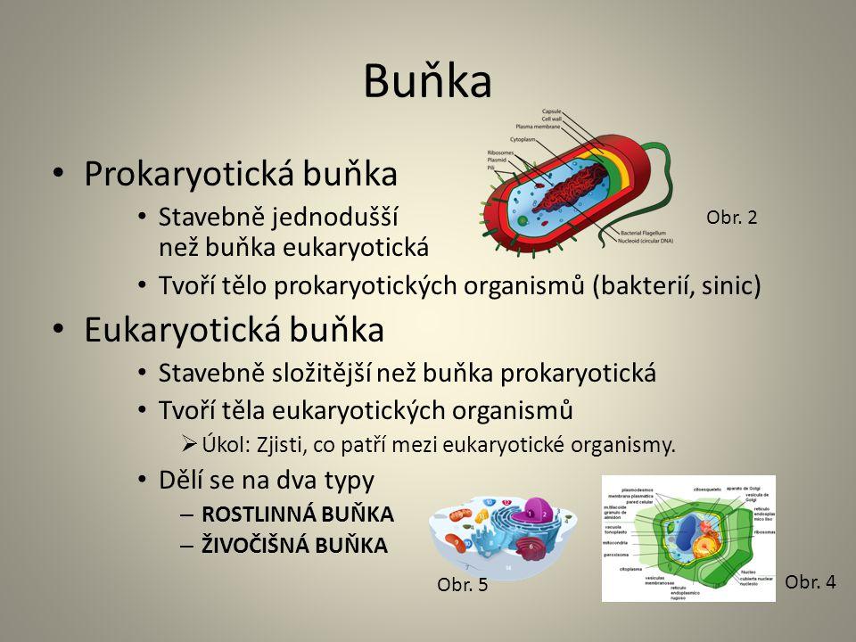Buňka • Prokaryotická buňka • Stavebně jednodušší než buňka eukaryotická • Tvoří tělo prokaryotických organismů (bakterií, sinic) • Eukaryotická buňka