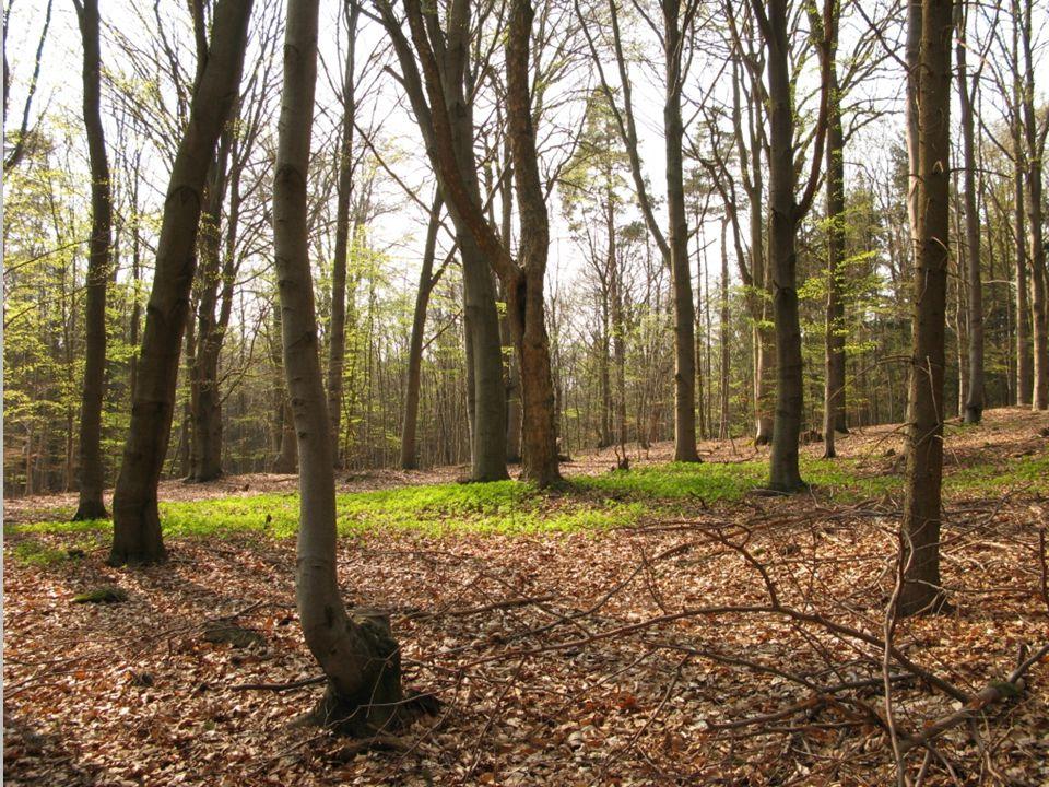 Půda se odevzdává lesu a les půdě… Zdroj: Chris Maser - Přeměněný les