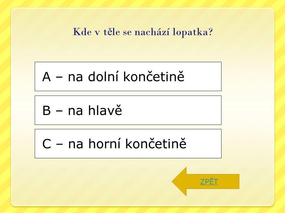 C – na horní končetině B – na hlavě A – na dolní končetině Kde v t ě le se nachází lopatka? ZPĚT